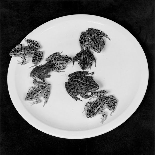 robert-mapplethorpe-frongs-1984
